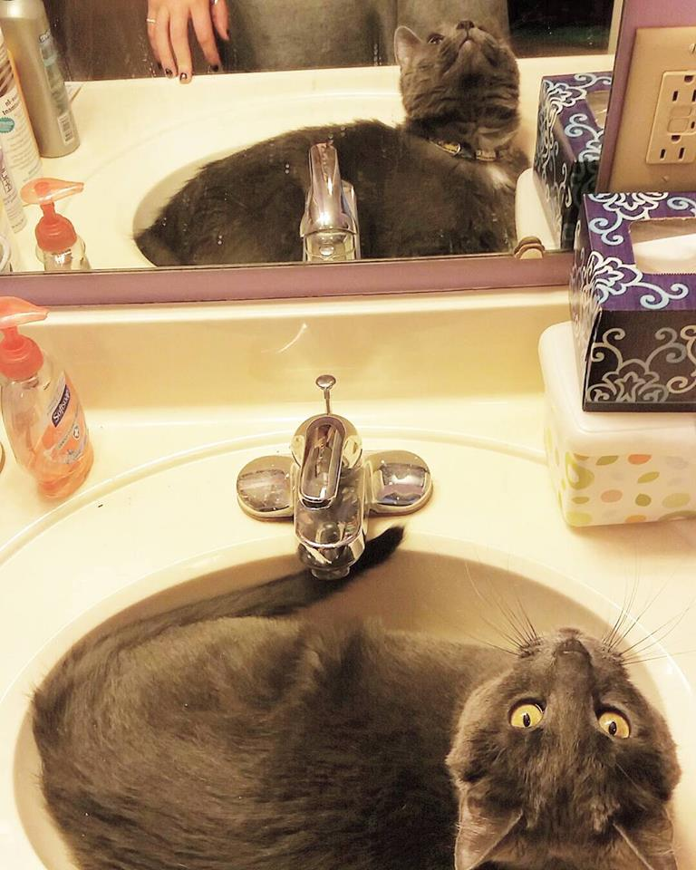 Once you get a cat…you never goback