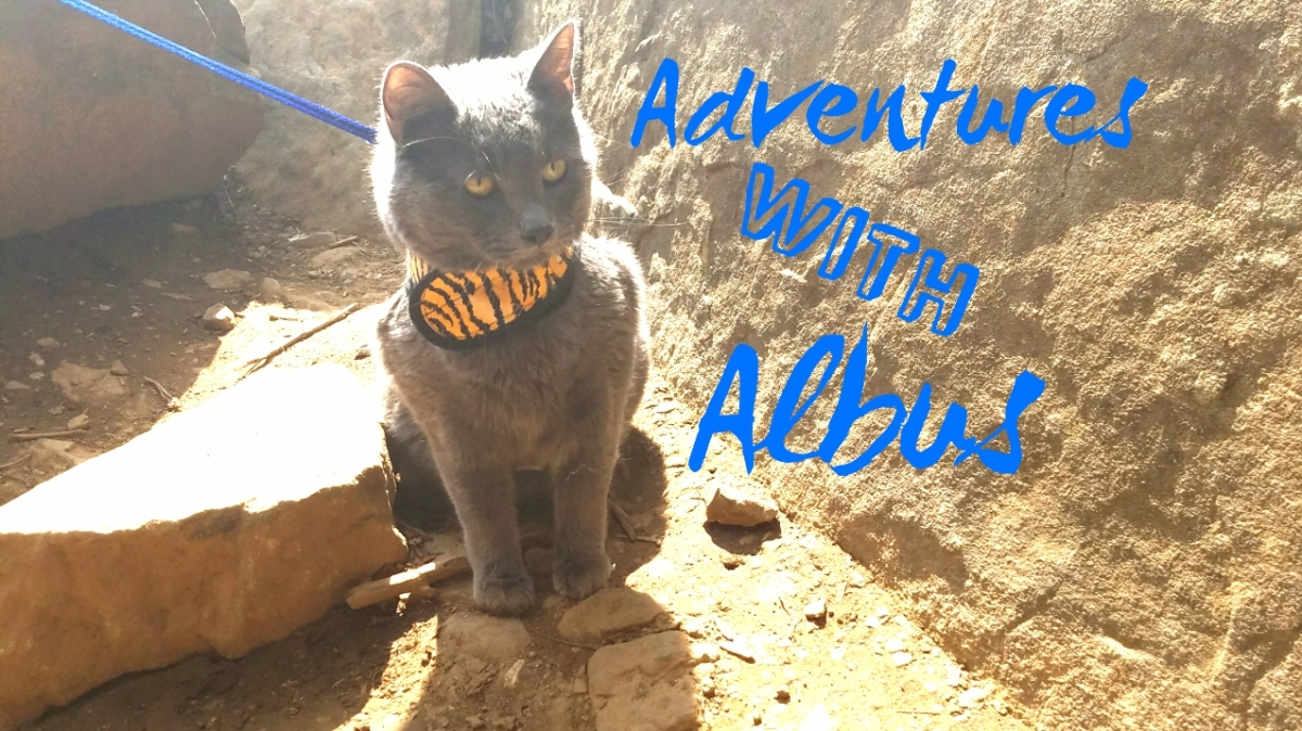 Adventures With Albus: Devils Den